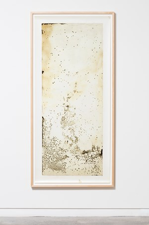 Scatter by Joyce Campbell contemporary artwork