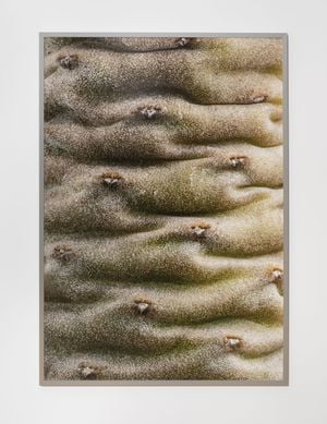 Cambrian Explosion by Youngjin Yoo contemporary artwork