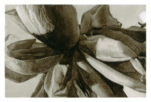 Rose II Duotone by Tim Maguire contemporary artwork