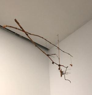 Untitled (Precarios) by Cecilia Vicuña contemporary artwork