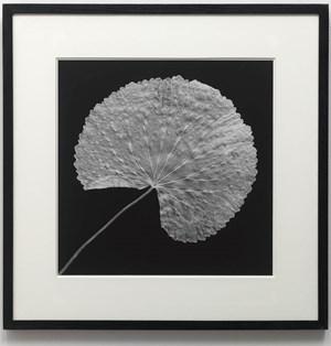Leaf by Robert Mapplethorpe contemporary artwork