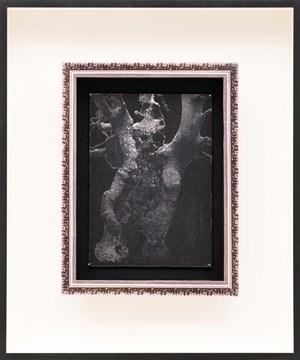 L'Hêtre à l'Image (hiver 2012) by Patrick Van Caeckenbergh contemporary artwork