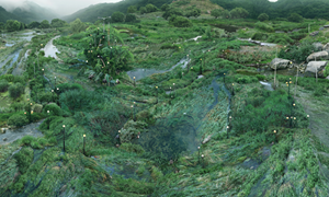 The Water-grass Network of IT Specialists by Seoung Won Won contemporary artwork