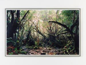 Paradise 15, Yakushima/Japan by Thomas Struth contemporary artwork photography, print