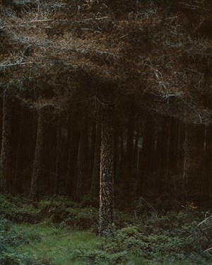 Forest by Conor Clarke contemporary artwork