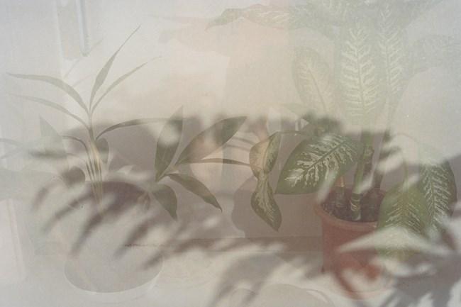 Verandah by Noguchi Rika contemporary artwork
