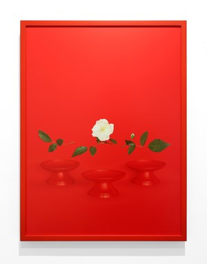 Red Bowls from the series Simple Text by Sarah Charlesworth contemporary artwork