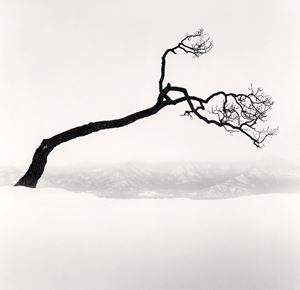 Kussharo Lake Tree Study 9 by Michael Kenna contemporary artwork