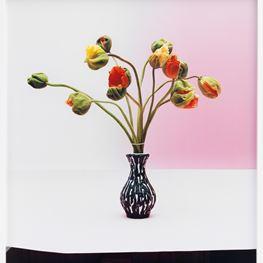 Annette Kelm contemporary artist