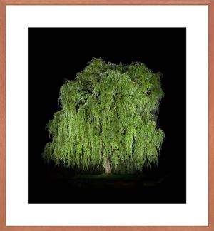 Baum #7 by Ralf Peters contemporary artwork photography