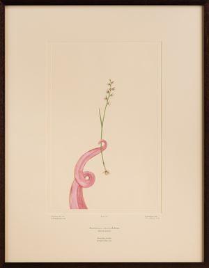 Untitled 317 by Caroline Rothwell contemporary artwork