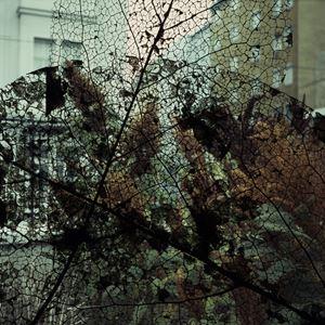Shrubs 2 by Tilyen Mucik contemporary artwork