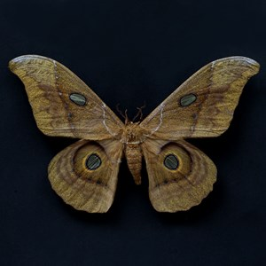 Butterfly #7 by Krisada Suvichakonpong contemporary artwork