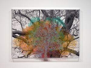 Numbers and Trees: London Series 1, Tree #6, Fetter Lane by Charles Gaines contemporary artwork