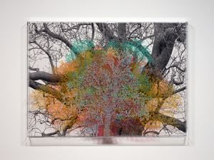 Numbers and Trees: London Series 1, Tree #6, Fetter Lane by Charles Gaines contemporary artwork painting, photography