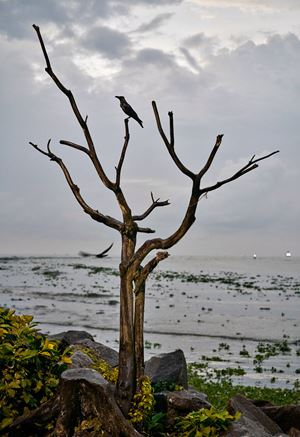 Dead Wood by Flo Maak contemporary artwork