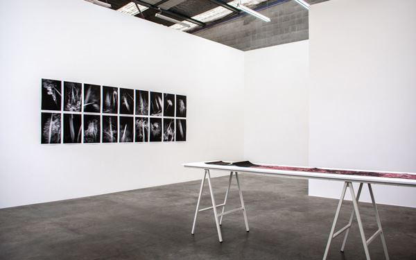 Exhibition view: Anne Noble, a line between two trees, Jonathan Smart Gallery, Christchurch (13 March–14 April 2020). Courtesy Jonathan Smart Gallery.