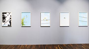 Contemporary art exhibition, Yoshinori Mizutani, Birds at Christophe Guye Galerie, Zurich