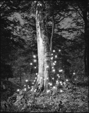 Photo Respiration Trees Shirakami #4 by Tokihiro Sato contemporary artwork