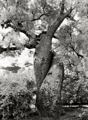 The Lovers by Beth Moon contemporary artwork