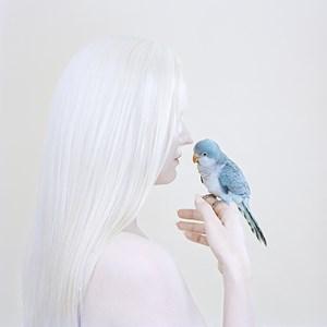 Birds Eye by Petrina Hicks contemporary artwork
