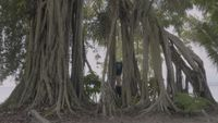 Breathe by Tong Wenmin contemporary artwork moving image