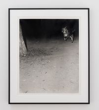 Untitled (Dog in mountain). Seoul, 2019. by Jookyung Lee contemporary artwork photography