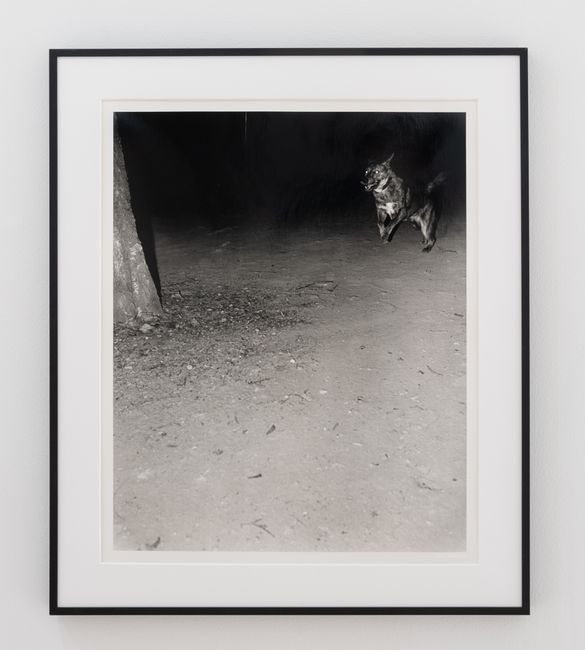 Untitled (Dog in mountain). Seoul, 2019. by Jookyung Lee contemporary artwork