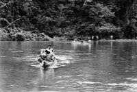 Makunaíma (River-Crossing) 1-15 by Lothar Baumgarten contemporary artwork photography