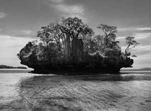 Baobab trees on a mushroom island in Bay of Moramba, Madagascar by Sebastião Salgado contemporary artwork