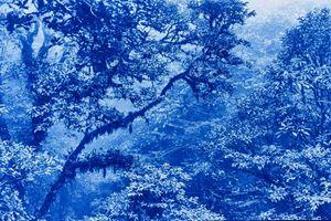 Monteverde, Costa Rica - De la serie La selva Azul by Javier Hinojosa contemporary artwork print