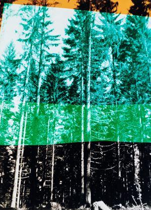 Wald in vier Farben by Frank Mädler contemporary artwork
