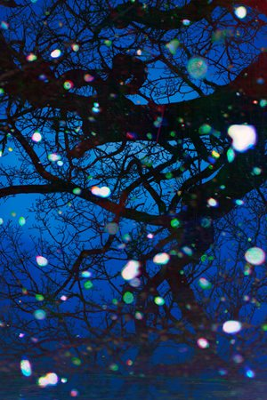 Trees and Snow IV by Tim Maguire contemporary artwork