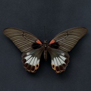 Butterfly #12 by Krisada Suvichakonpong contemporary artwork