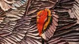 Contemporary art exhibition, Dashiell Manley, Dashiell Manley at SILVERLENS, Manila, Philippines