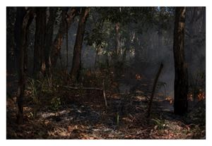 Controlled Burn #2 by Virginia Woods-Jack contemporary artwork