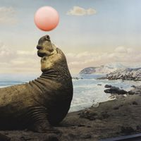 Performing Seal by Anne Zahalka contemporary artwork photography