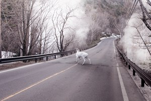 Deer Park, Japan by Robert Zhao Renhui contemporary artwork