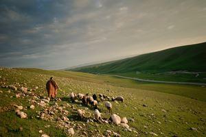 Shepherds and the Slaughterhouse 35, Akre, Kurdistan, Iraq by Simon Chang contemporary artwork