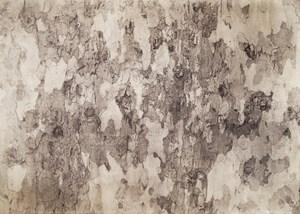 Tree Trunk Bark 3 by Kunié Sugiura contemporary artwork