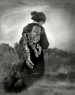 Journey of the Bobcat by Beth Moon contemporary artwork