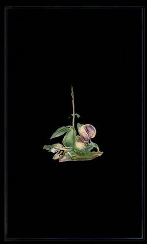 Infinite Herbarium Morphosis #5 by Caroline Rothwell contemporary artwork moving image