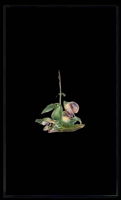 Infinite Herbarium Morphosis #5 by Caroline Rothwell contemporary artwork