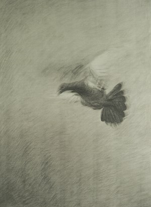 Pigeon 鸽子 by Hong Lei contemporary artwork