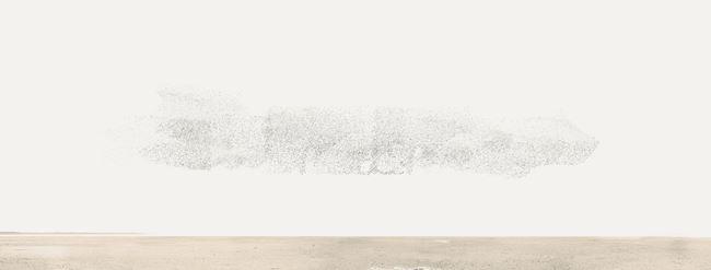 54321 Birds At High Tide by Robert Zhao Renhui contemporary artwork