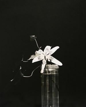 Lis by Constantin Brancusi contemporary artwork