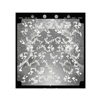 New Order 00 by Yuki Yamazaki contemporary artwork photography