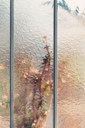 Euphorbia milii by Samuel Zeller contemporary artwork