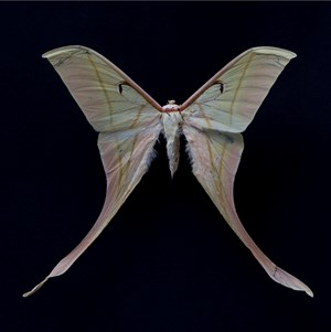 Butterfly #15 by Krisada Suvichakonpong contemporary artwork