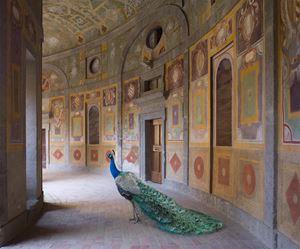 Heaven's Vault, Villa Farnese, Caprarola by Karen Knorr contemporary artwork